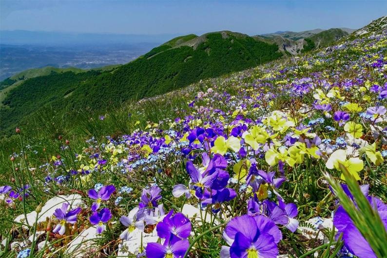 Concorso floranet per il fiori appenninici