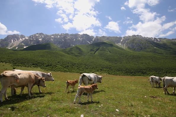 Un parco da salvare per il futuro della montagna abruzzese